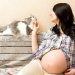 Можно ли играть с кошкой беременной